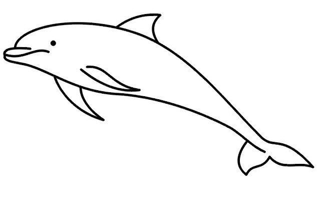 Motiv tetování Delfín / Žralok 1426