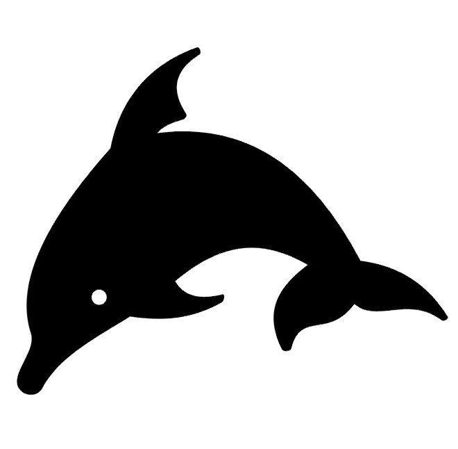 Delfín / Žralok