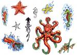 Chobotnice Hvězdice Koník Mořský Zvířata